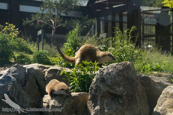 f:id:otters_yvonne:20160628162750j:plain
