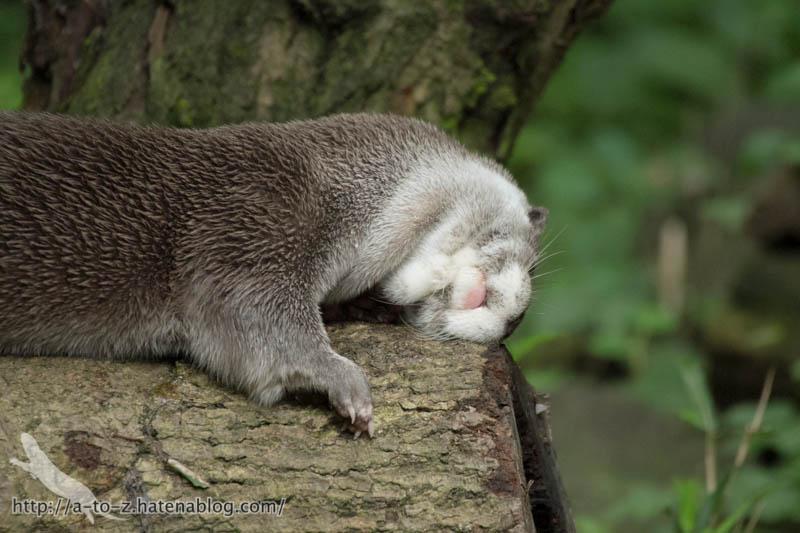 f:id:otters_yvonne:20160720211302j:plain