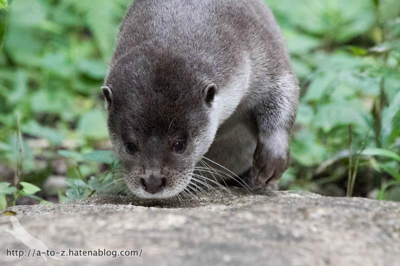 f:id:otters_yvonne:20160720211304j:plain