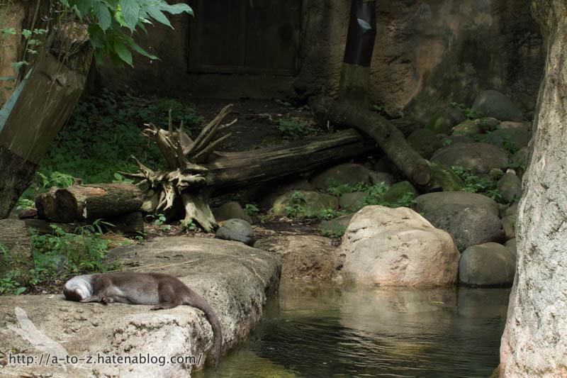 f:id:otters_yvonne:20160720211309j:plain