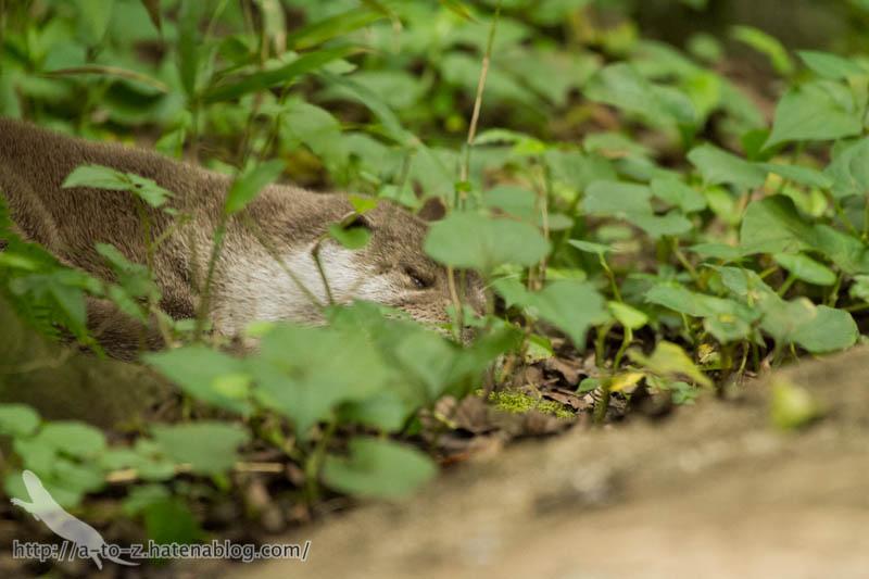 f:id:otters_yvonne:20160720211311j:plain