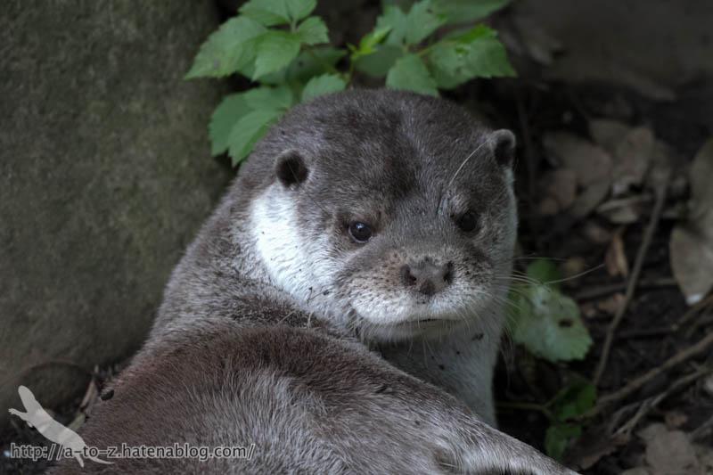 f:id:otters_yvonne:20160720211317j:plain