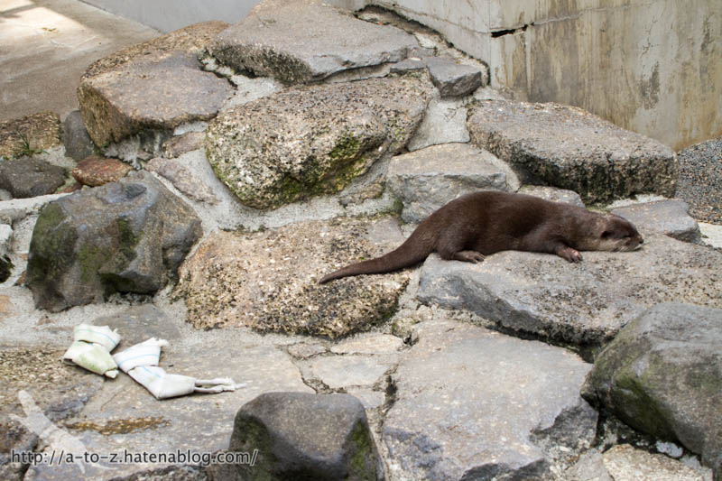 f:id:otters_yvonne:20160821141155j:plain