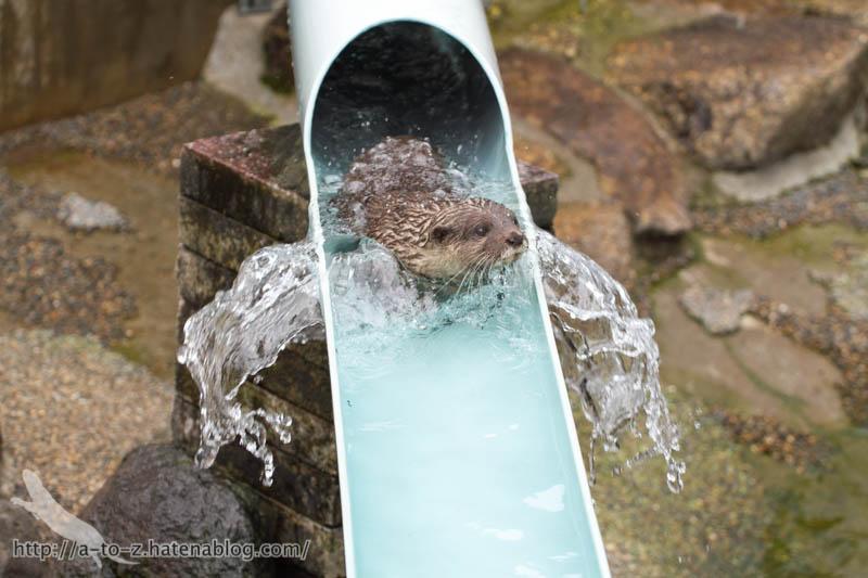 f:id:otters_yvonne:20160821141156j:plain