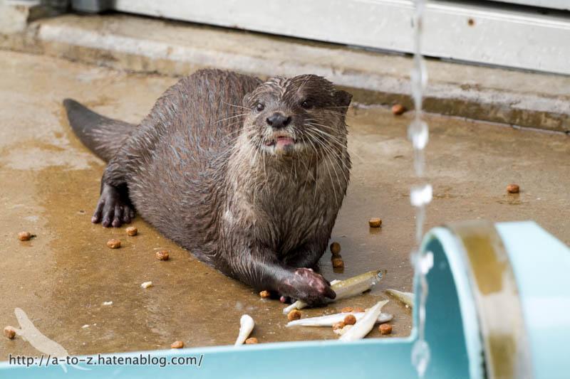 f:id:otters_yvonne:20160821141200j:plain