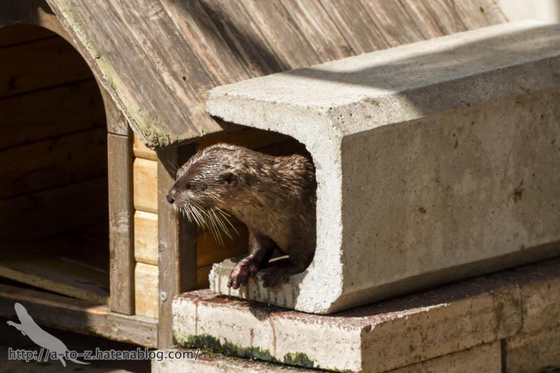 f:id:otters_yvonne:20160821141211j:plain