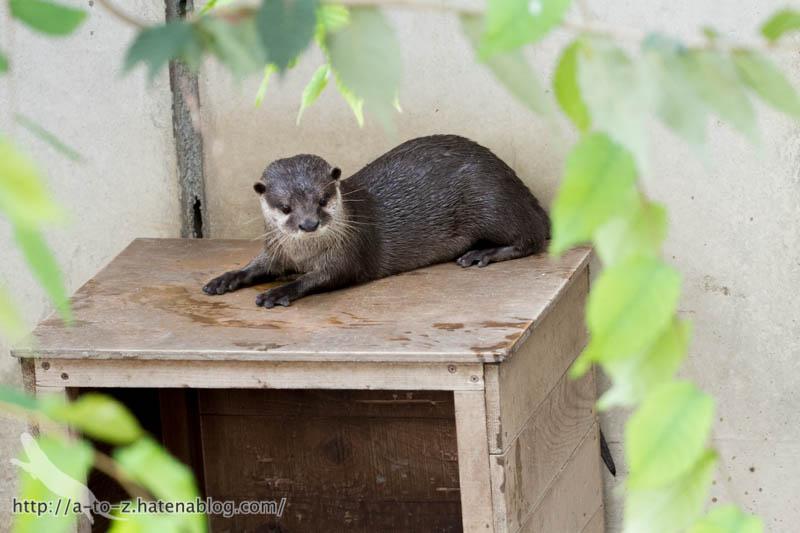 f:id:otters_yvonne:20160821141213j:plain