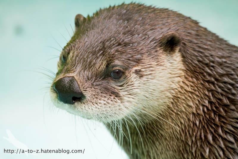 f:id:otters_yvonne:20160921133102j:plain
