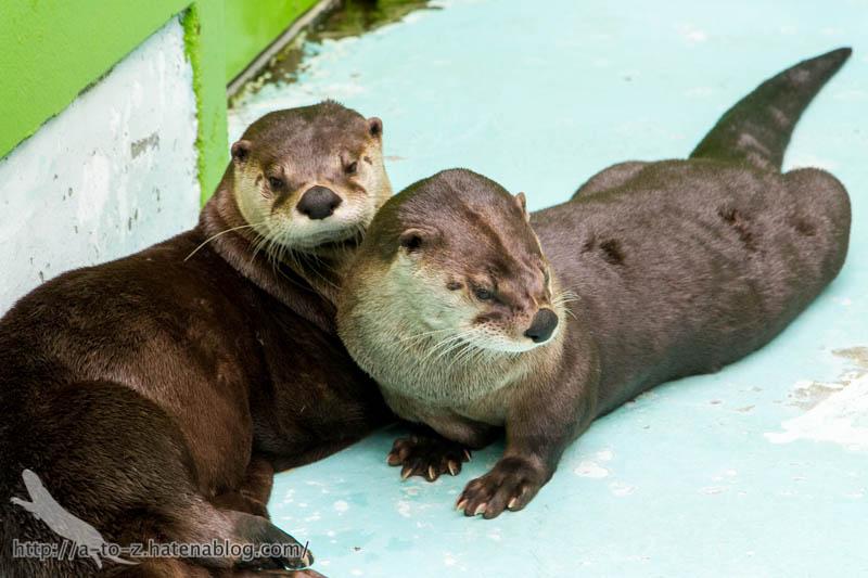 f:id:otters_yvonne:20160921133121j:plain