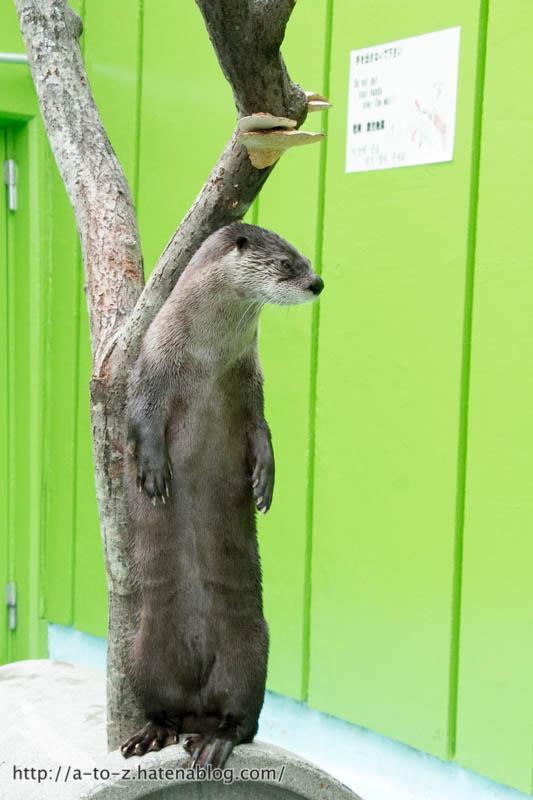 f:id:otters_yvonne:20160921133131j:plain