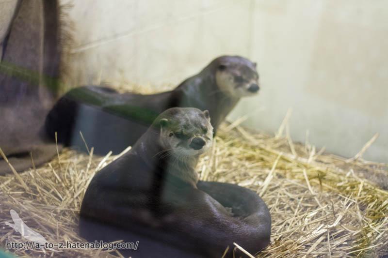 f:id:otters_yvonne:20160921133137j:plain