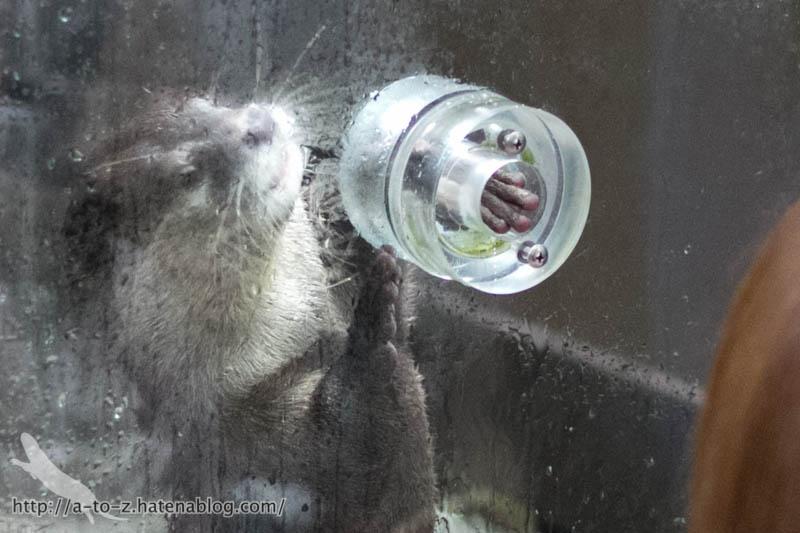 f:id:otters_yvonne:20161026233749j:plain