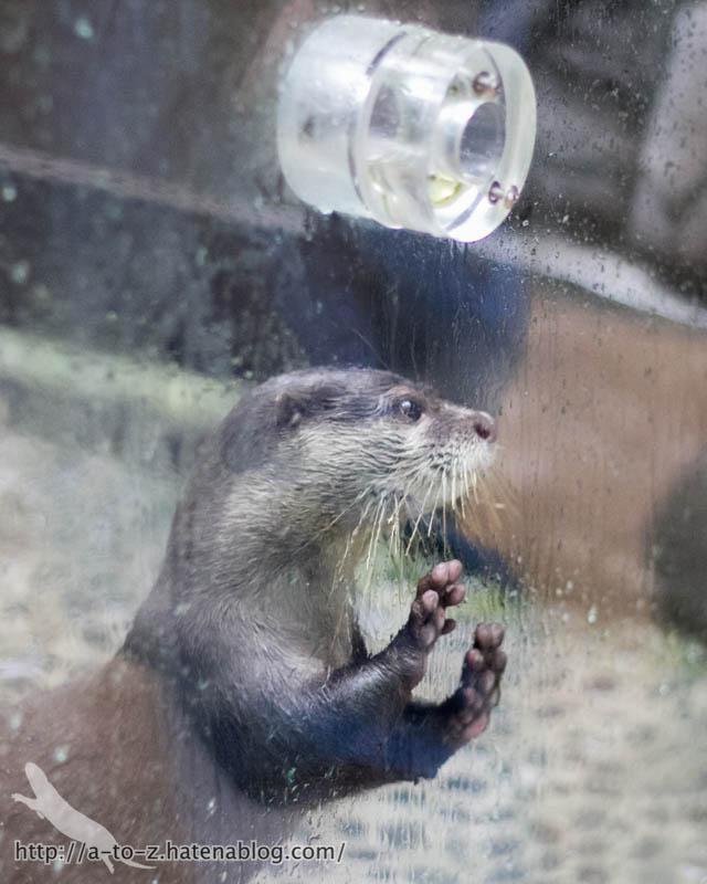 f:id:otters_yvonne:20161026233750j:plain