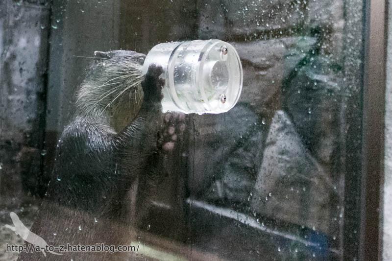 f:id:otters_yvonne:20161026233758j:plain