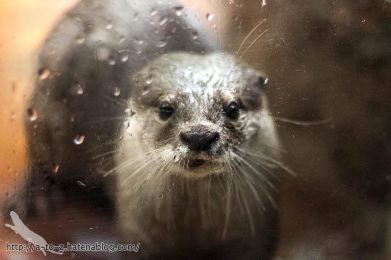 f:id:otters_yvonne:20161102203619j:plain