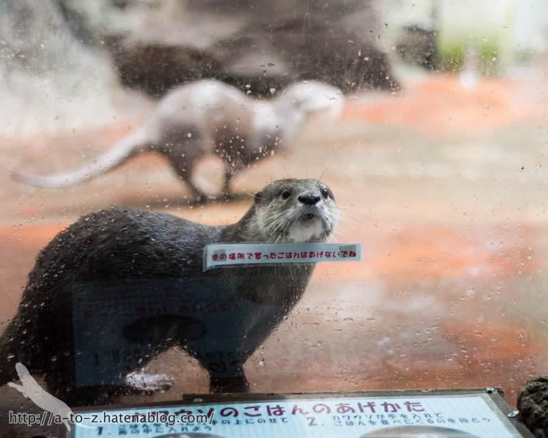 f:id:otters_yvonne:20161102203620j:plain