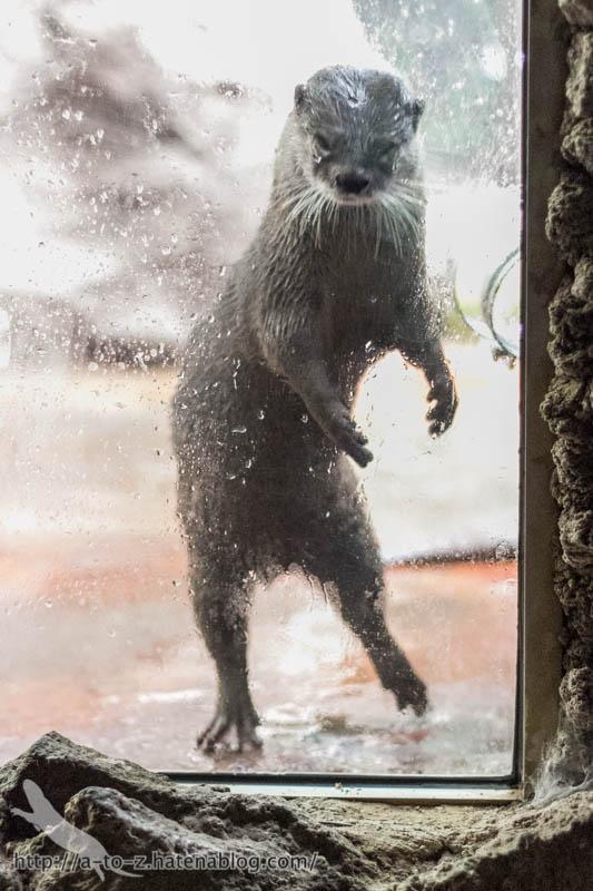 f:id:otters_yvonne:20161102203622j:plain