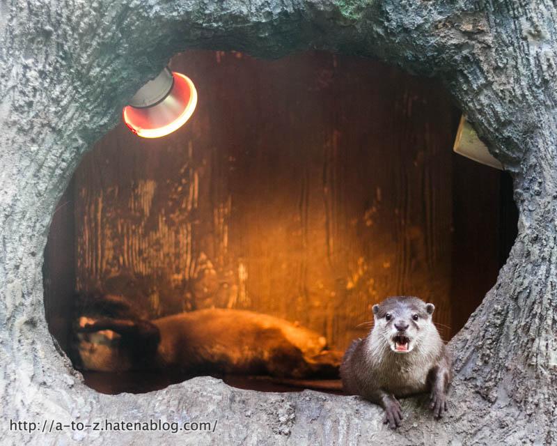 f:id:otters_yvonne:20161102203629j:plain