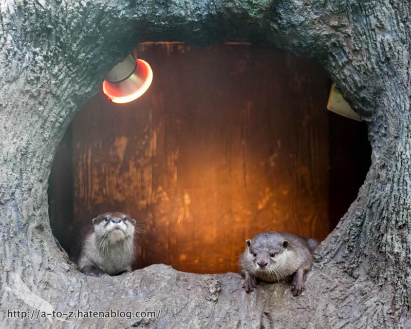 f:id:otters_yvonne:20161102203630j:plain