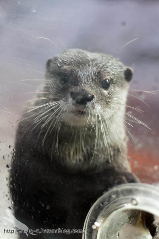 f:id:otters_yvonne:20161102203634j:plain