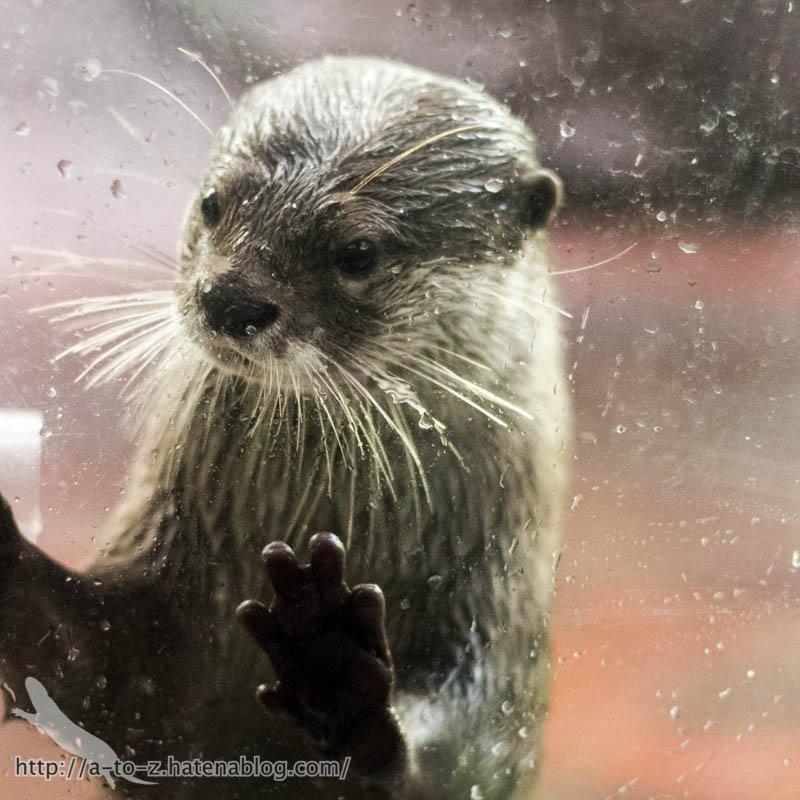 f:id:otters_yvonne:20161102203635j:plain