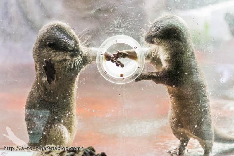 f:id:otters_yvonne:20161102203637j:plain