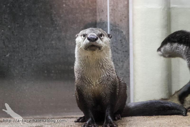 f:id:otters_yvonne:20170412154310j:plain