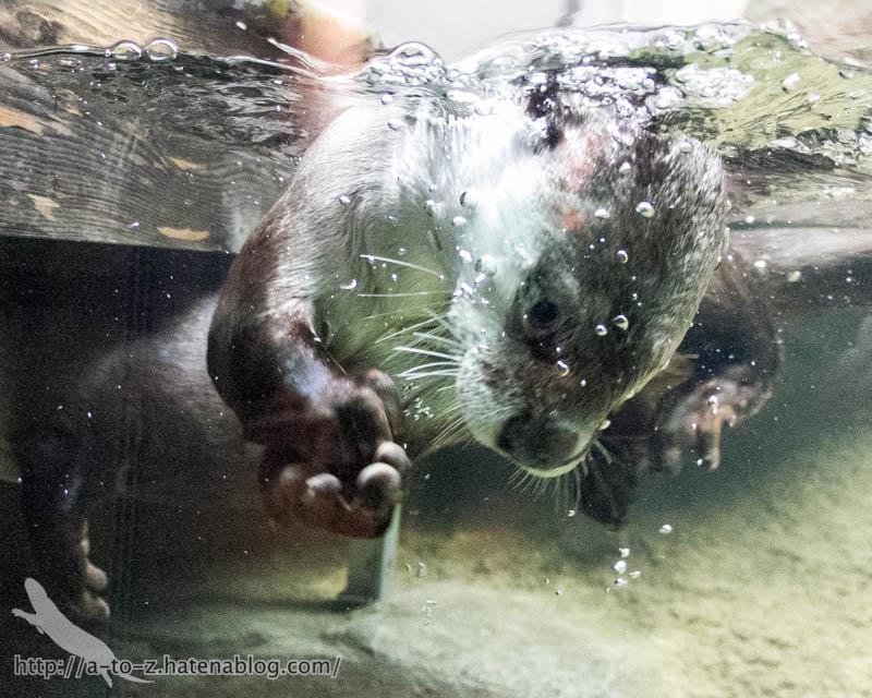 f:id:otters_yvonne:20170412154312j:plain