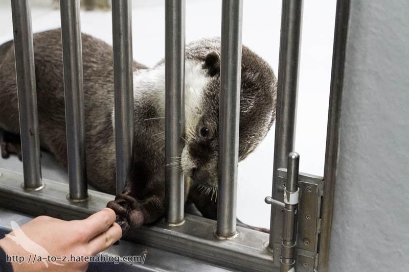 f:id:otters_yvonne:20170412154322j:plain