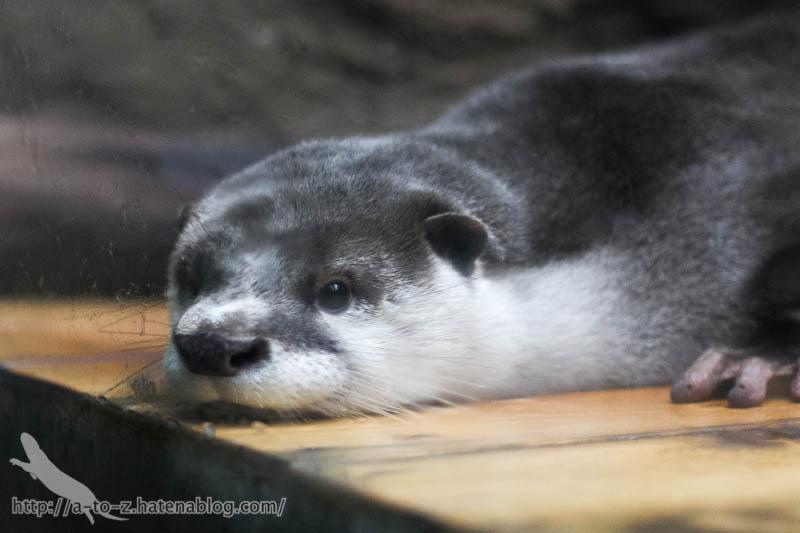f:id:otters_yvonne:20170412154336j:plain