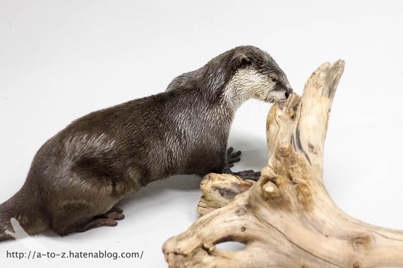 f:id:otters_yvonne:20170412154347j:plain