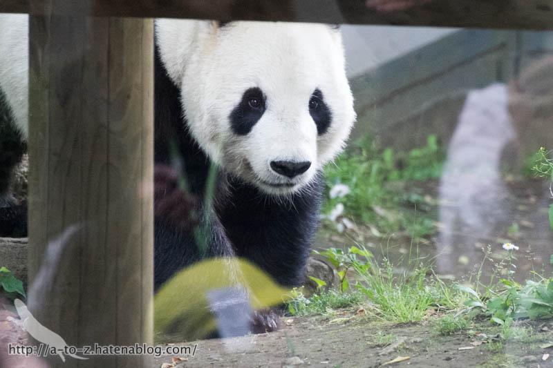 f:id:otters_yvonne:20170525235541j:plain