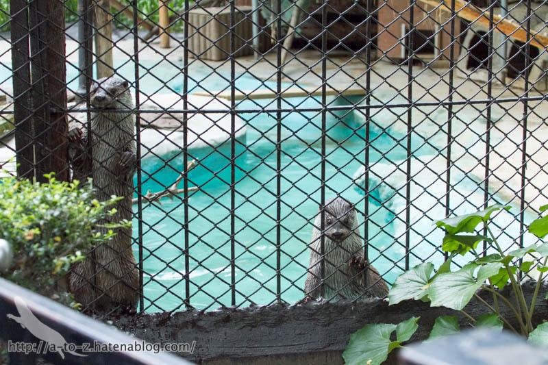 f:id:otters_yvonne:20170525235543j:plain