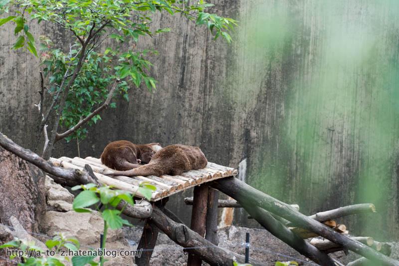 f:id:otters_yvonne:20170525235548j:plain