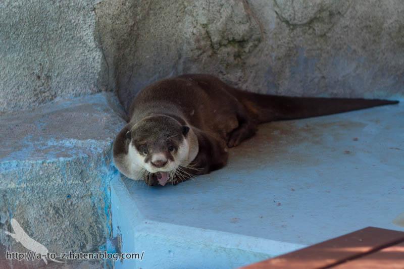 f:id:otters_yvonne:20170530220322j:plain