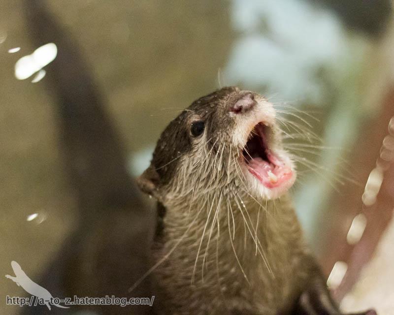 f:id:otters_yvonne:20171006184449j:plain