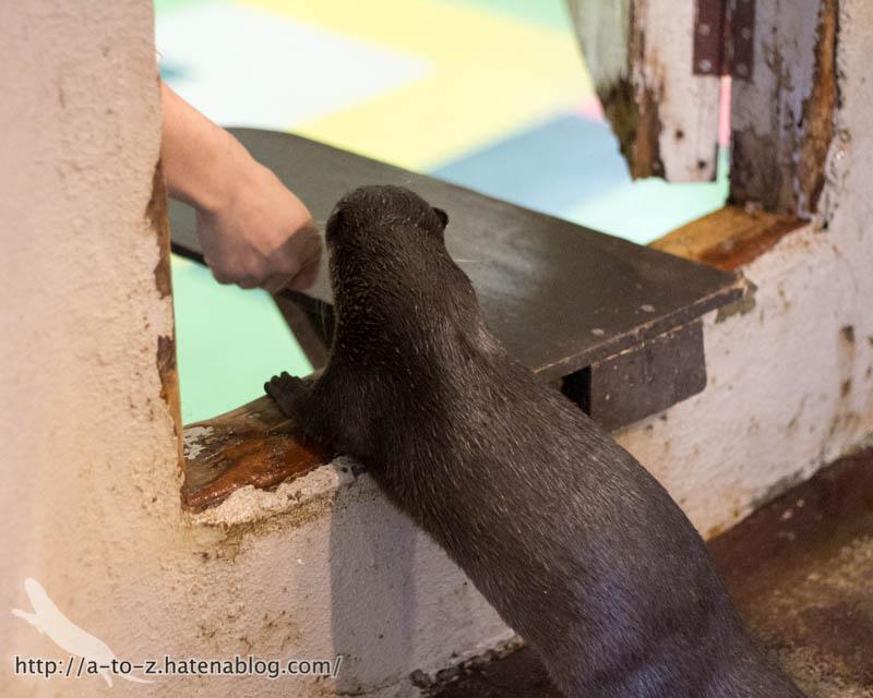 f:id:otters_yvonne:20171006184452j:plain