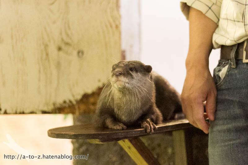 f:id:otters_yvonne:20171006184455j:plain