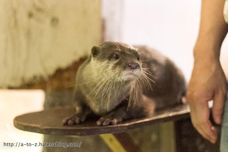 f:id:otters_yvonne:20171006184457j:plain