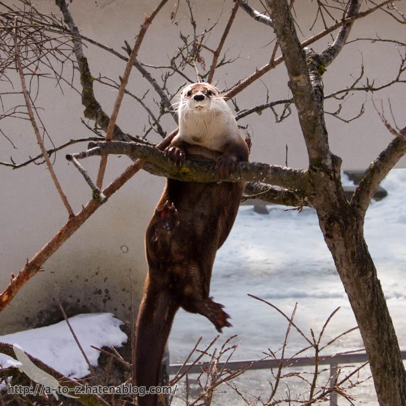 f:id:otters_yvonne:20180222103912j:plain