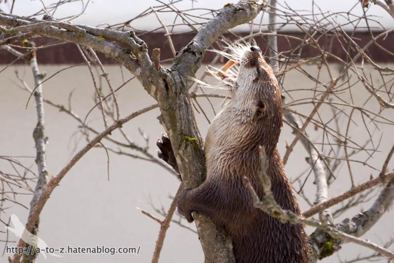 f:id:otters_yvonne:20180222103915j:plain