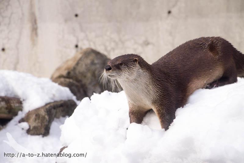f:id:otters_yvonne:20180222103927j:plain