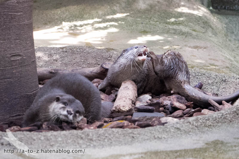 f:id:otters_yvonne:20181015224314j:plain