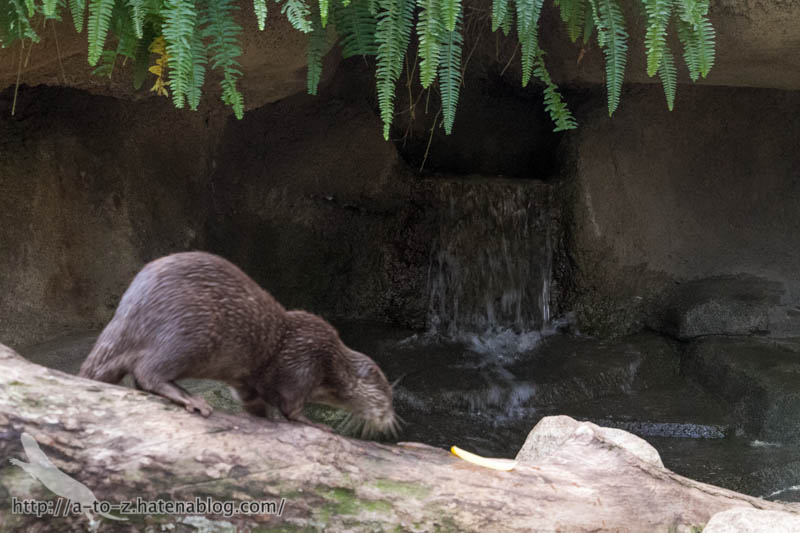 f:id:otters_yvonne:20181015224316j:plain