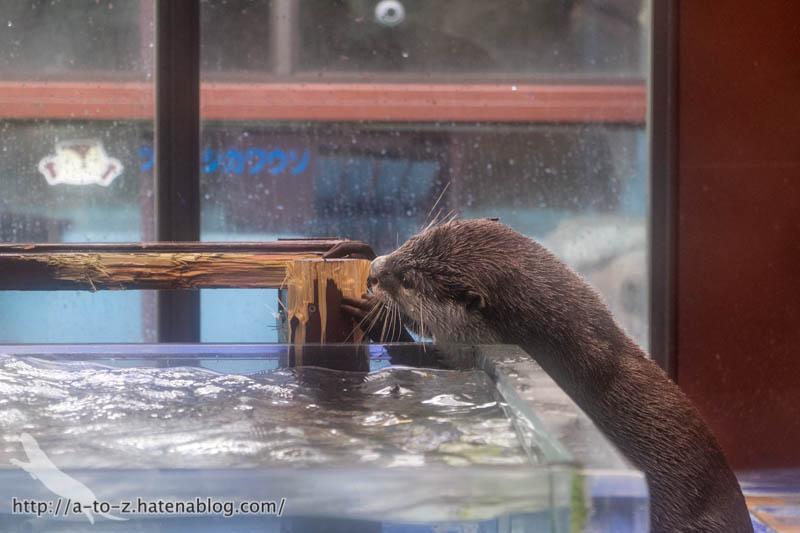 f:id:otters_yvonne:20190109220545j:plain