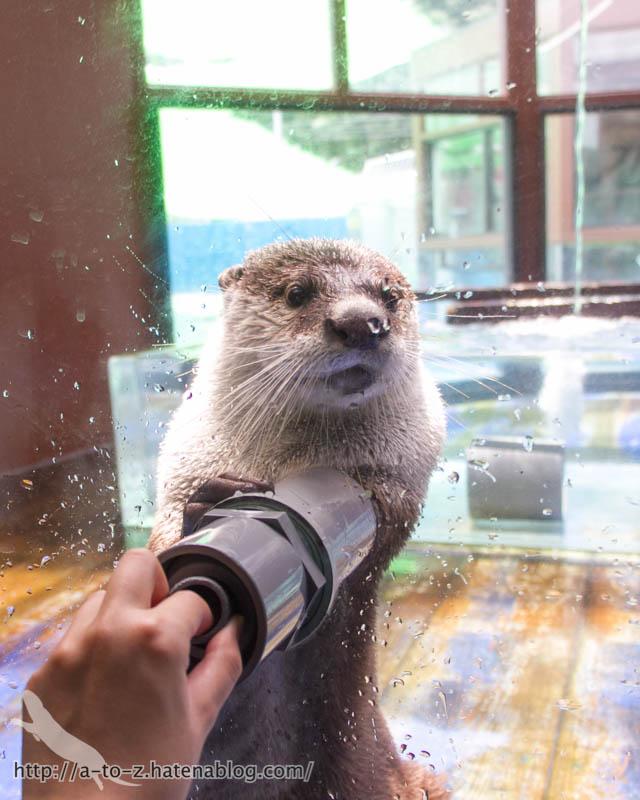 f:id:otters_yvonne:20190109220550j:plain