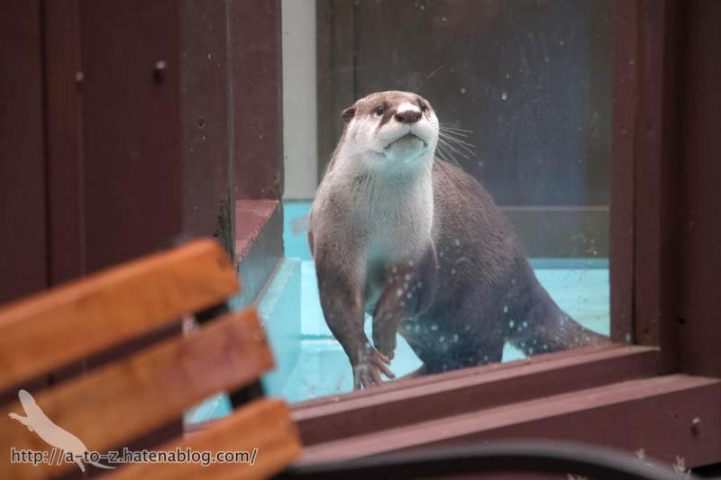 f:id:otters_yvonne:20190109220552j:plain