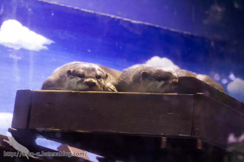 f:id:otters_yvonne:20190109220555j:plain