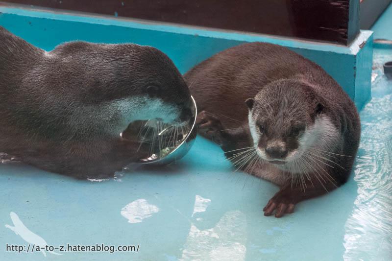 f:id:otters_yvonne:20190109220601j:plain