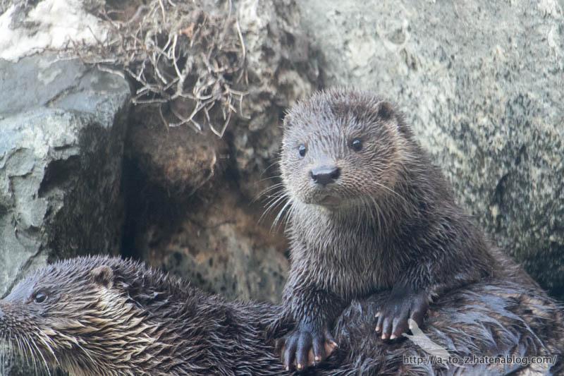 f:id:otters_yvonne:20190201125422j:plain